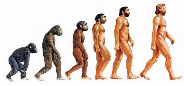 Infografía de la evolución humana